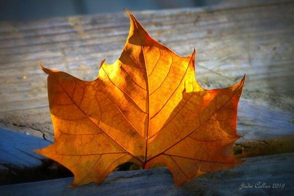 Golden Leaf, by Judie Collier